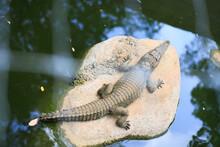 A Southeast Asian Crocodile Is Sunbathing On Rocks In A Well.