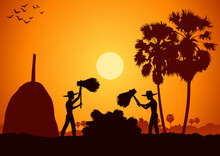 Country Life Asia Man Harvest Rice By Hit Rice Sheaf Sunrise Time Silhouette