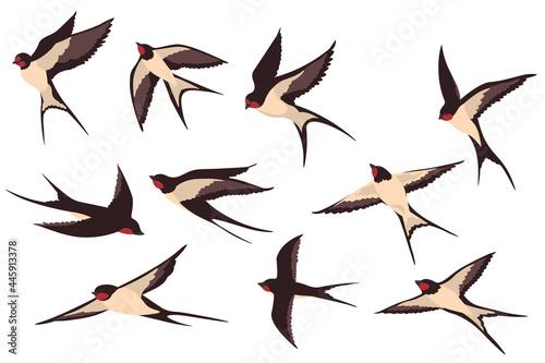 Fototapeta premium Colorful Flying Swallows Flat Illustration Set