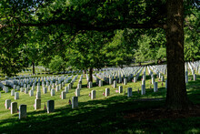 Mature Trees Shade The Tomb Stones At Arlington Cemetery