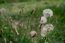 Snail On A Grass