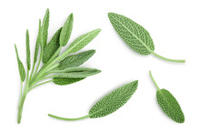 Fresh Sage Herb Isolated On White Background With Clipping Path And Full Depth Of Field, Top View. Flat Lay