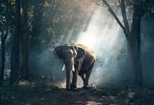 ELEPHANT TRUNK FOREST DEFENSES JUNGLE