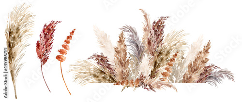 Fotografie, Obraz Dried grass set painted with watercolor
