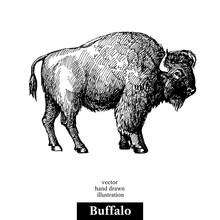 Hand Drawn Sketch Animal Buffalo American Bison. Vector Black And White Vintage Illustration. Isolated Object On White Background.