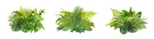 Beautiful Composition With Fern And Other Tropical Leaves On White Background, Collage. Banner Design