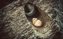 Close Up Of A Seashell