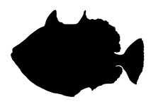 Vector Silhouette Of A Sea Fish Side View . Black Icon-silhouette Of A Triggerfish Clown Isolated On A White Background For A Design Template For Signage, Logos