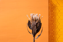 Dried Protea Flower, Decorative Brown Glass Against Orange Background.Empty Space For Design