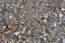 Dried Leaves And Stems Of Plants On Pebbles Of Different Sizes