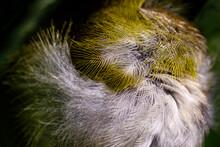White And Yellow Bird Wing