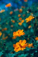 도시 거리의 들꽃