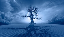 """Lone Dead Tree With Full Blue Moon, Sand Dune And Tree's Shadow In The Foreground   """"Elements Of This Image Furnished By NASA """""""