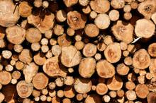 Nahaufnahme Von Abgesägten Und Gestapelten Baumstämmen Im Sommer Mit Schattenwurf