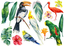 Set Of Tropical Birds On Isolated White Background, Watercolor Illustration
