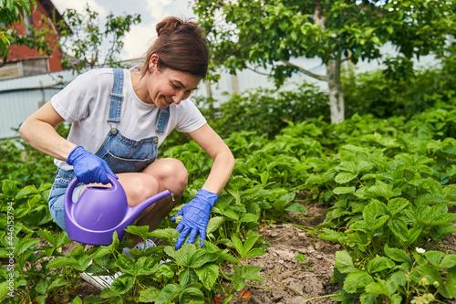 Fotografie, Obraz Woman watering strawberry bushes for better harvest