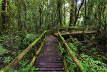 Beautiful Rain Forest At Nature Trails Ang Ka Doi Inthanon,Chiangmai In Thailand Is A Very Popular For Photographer And Tourists. Natural And Travel Concept.