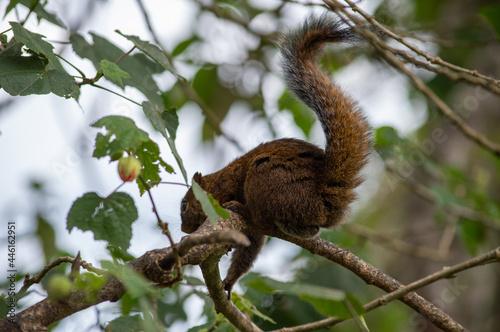Fototapeta premium squirrel on tree