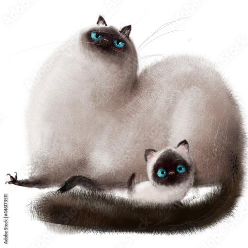 Fotografie, Obraz cute siamese cats