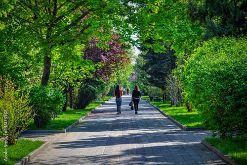 Fotografie, Obraz Pushkin Boulevard in Rostov-on-Don