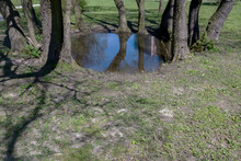 Round Large Puddle Formed After Rain In Funnel Surrounded On All Sides By Gray Tree Trunks On Park Lawn Covered With Sparse Green Grass. In Water Reflected Trees And Top Of House Standing In Distance.