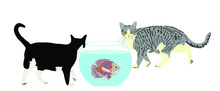 Two Hungry Cats Walking Around Oscar Fish In Fishbowl Aquarium Vector Illustration Isolated On White Background. Home Pet, Curious Cat And Scared Fish.