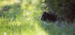 Czarny kot poluje w trawie