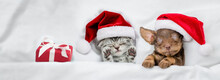 Tiny Kitten And Cute Dachshund Puppy Wearing Santa Hats Sleep Together  With Gift Box Under A White Blanket On A Bed At Home. Top Down View. Empty Space For Text