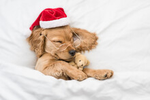 Funny English Cocker Spaniel Puppy Wearing Red Santa Hat Hugs Toy Bear And Sleeps Under White Blanket At Home. Top Down View