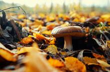 Bolete Forest Mushroom In Fall Season.