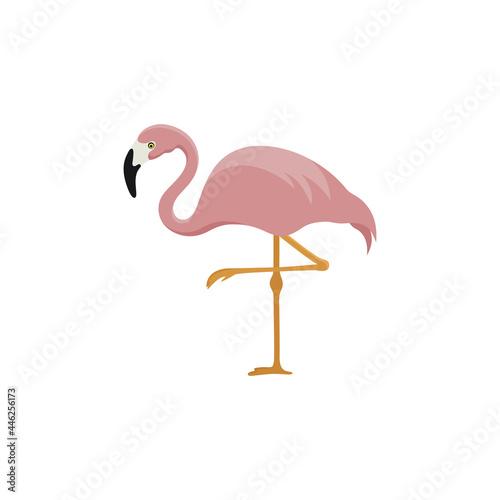 Fototapeta premium pink flamingo standing on one leg
