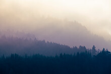 Three Diffuse Levels Of Mist Pervaded By Mountain Forest As A Background For Nature Themes