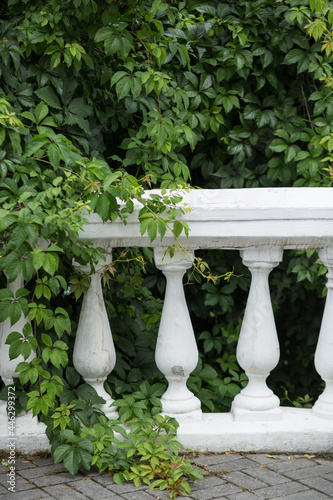 Fotografía Old hedge with balusters in the garden