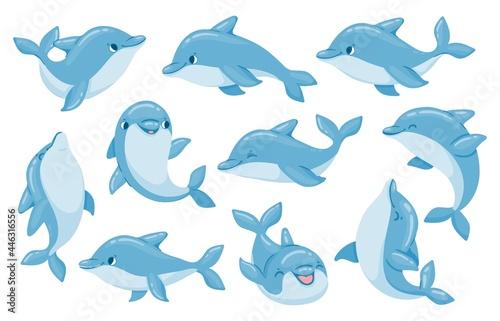 Fotografia, Obraz Dolphin characters