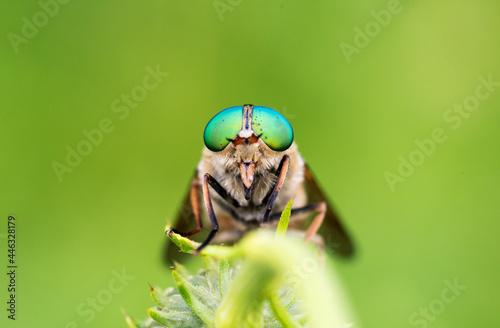 Photo un insetto con un paio di bellissimi occhi appoggiato su un fiore alle prime luc