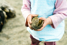 Closeup Cropped Image Of A Young Child Holding A Sandy Sea Shell