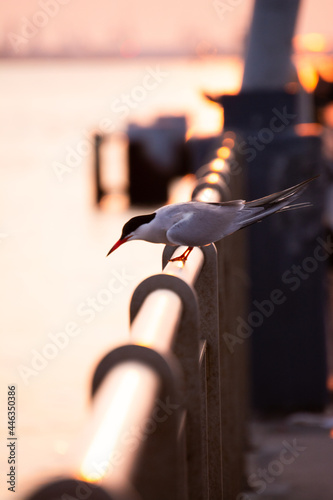 Fototapeta premium close up of a bird