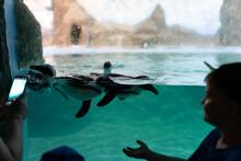 Penguins In The Zoo Aquarium