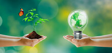 Hand Holding Tree And Light Bulb With World Crystal Glass Inside. Butterfly On Sunny Green Grass Bokeh Background. Save Clean Planet, Save World And Environment, Ecology, World Earth Day Concept.