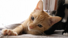 Cut Orange Kitten Closeup Awake