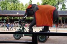 Elephant Show In Sriracha Tiger Zoo, Bangkok, Thailand
