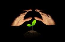 Upside Down Hand Protected Little Green Seedlings Growing In Soil On Black Background.
