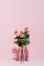 Begonias In A Vase