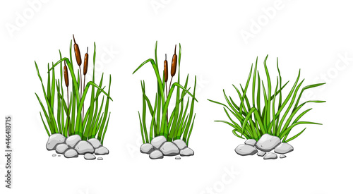 Fotografie, Obraz Reeds and grass grow in the stones