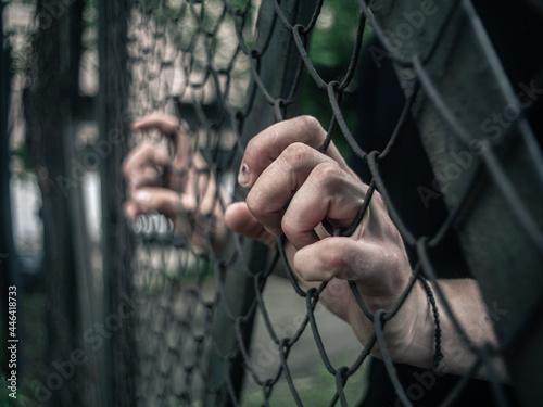Fotografia Captive