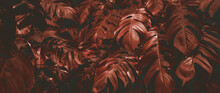 Red Leaf Background, Nature Background Concept