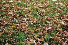 Close Up Of Autumnal Leaf Litter On Grass