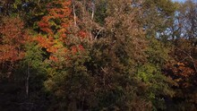 Close Up Drone Footage Of Trees Filmed In The Fall