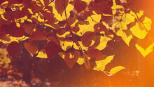 Banner Autumn Leaves With A Blurred Background For The Design, Yellow Leaves With A Light On A Branch