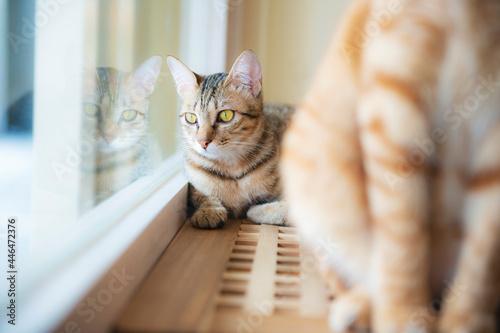 Fotografía domestic cats interact in the living room